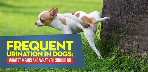 frequent in puppies frequent in dogs what it means and what you should do