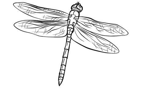 tinkerbell colouring book pdf - Desenho de Fada Fawn pintando ...