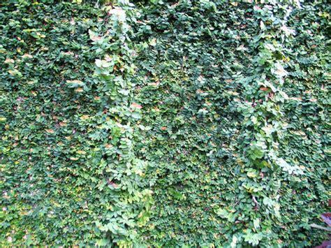 miami every day photo vine invasion