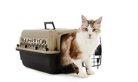 kennels at petsmart cat carriers at petsmart cat carrier stylish and secure this will keep want a