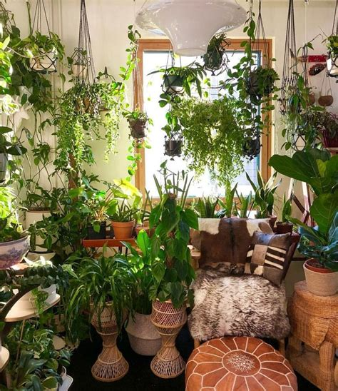 gorgeous room  images plant decor room