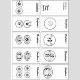 Mitosis Flip Book Printable | 429 x 595 jpeg 67kB
