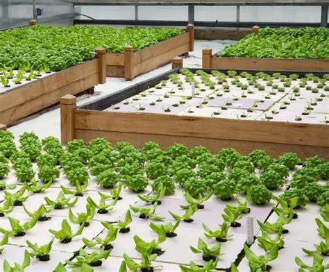 growing vegetables  greenhouse