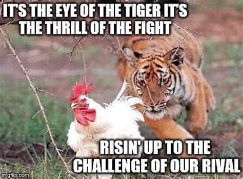 Eye Of The Tiger Meme - and the last known survivorstalks his prey in the nightand