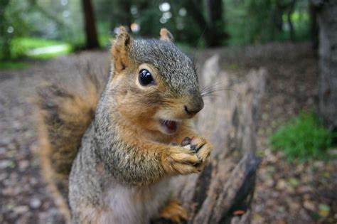 squirrel images 22 things you may not about squirrels mnn