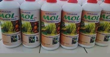 Em4 Pertanian Bakteri Starter Pengurai Sah Bahan Organik cara membuat mol sederhana rumah dan kebun