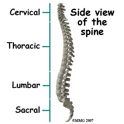5 sections of the spinal column page view article