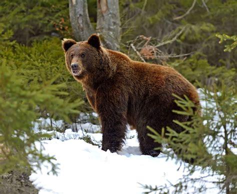 imagenes animales que viven en el bosque la france pays sauvage image 5 sur 9 20minutes fr
