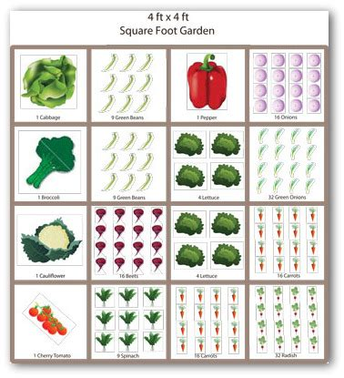 Square Foot Vegetable Garden Layout Square Foot Garden Layout Ideas