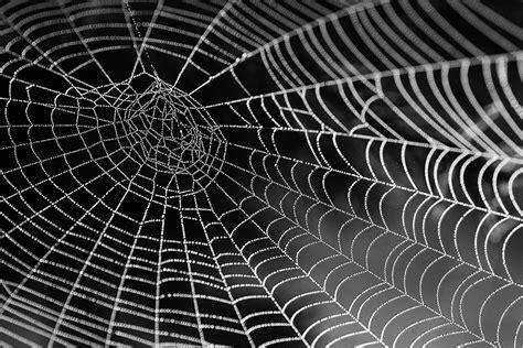 spider webs  computers robohub