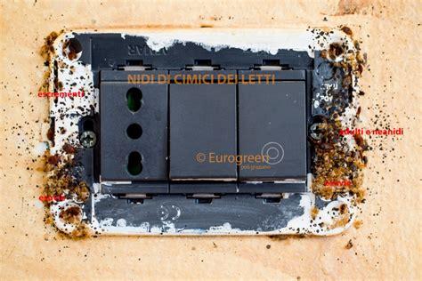 cimici da letto foto cimice da letto archivi eurogreen