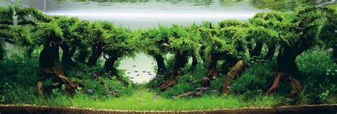 aquascapes com how to begin aquascaping in your aquarium aquescaping