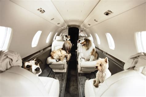 puppy on plane pets on jets dogs take to the sky with victor jet travel
