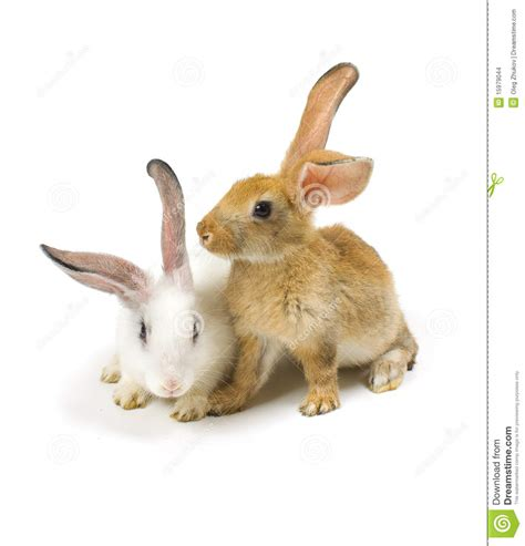white rabbit new year happy new year of rabbit stock images image 15979044