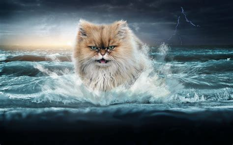 Sea Of Cats epic cat wallpaper wallpapersafari