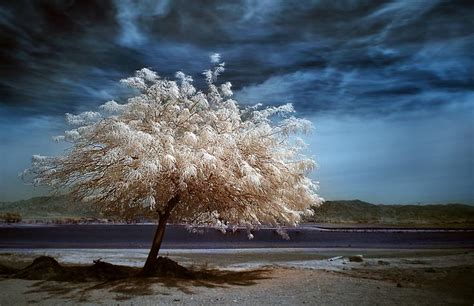beautiful tree photos 50 most beautiful trees photography