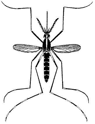 Gambar Fakta Menarik Tentang Nyamuk Berita Hari Aedes
