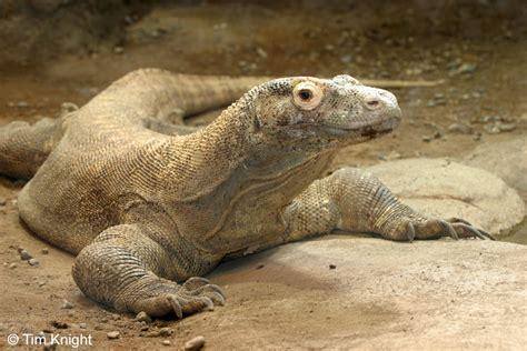 fauna indonesia tengah guru geografi wonosari