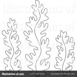 elegant seashell coloring pages coloring