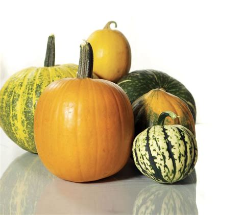 pumpkin names 17 best ideas about pumpkin varieties on