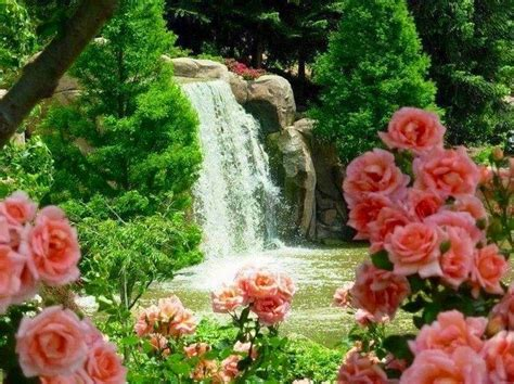beautiful waterfalls with flowers waterfall and pink roses waterfalls seashores nature