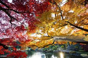 Japanese Cherry Blossom Tree Shinjuku Gyoen National Garden In Autumn Tokyo Stock Photo