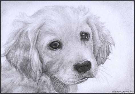 drawings of golden retrievers golden retriever puppy by wiccansoul on deviantart