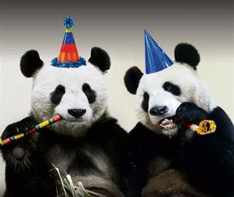 The Year Of The Panda happy voip panda day from our new