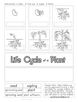 cycle of plants and animals worksheets plant cycle clipart worksheet coloring page