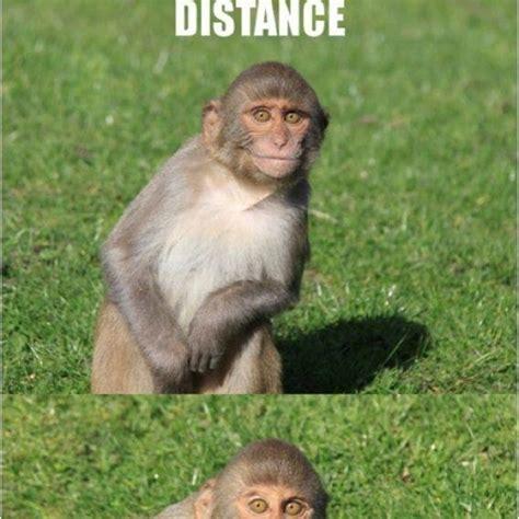 Monkey Meme Generator - smiling monkey meme generator