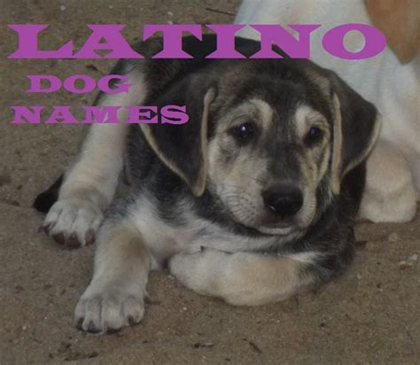 hispanic puppy names best names pethelpful