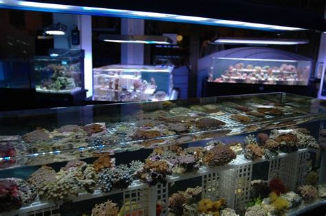 new fish store in madrid spain to use zero edge display tanks reef builders the reef and
