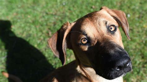 Hund Im Garten Beschäftigen by Mein Haustier Ist Tot Darf Ich Es Im Garten Begraben Wohnen