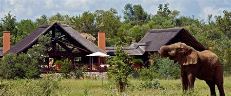 south africa family safari package family vacation