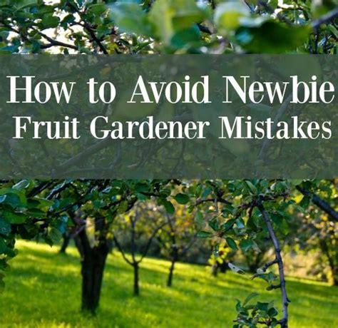 fruit garden ideas best 20 orchards ideas on fruit tree garden