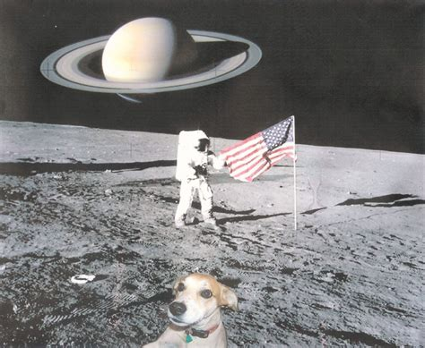 dogs in space the chronicles laika living being in space dogs in space