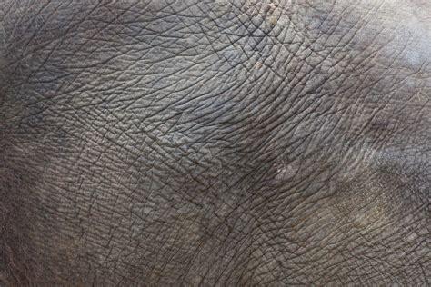 elefantenhaut tapete elephant skin texture free stock photo domain