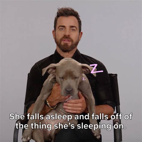 justin theroux facebook netflix justin theroux must love dogs facebook