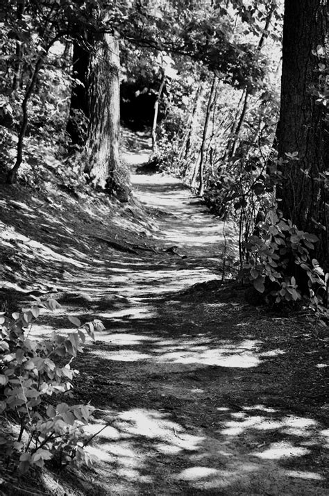 A Photographic Sage: The Well-Worn Path - Reflections on a