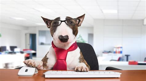 take your to work day 2017 akc pet insurance pet health and care advice petpartners inc