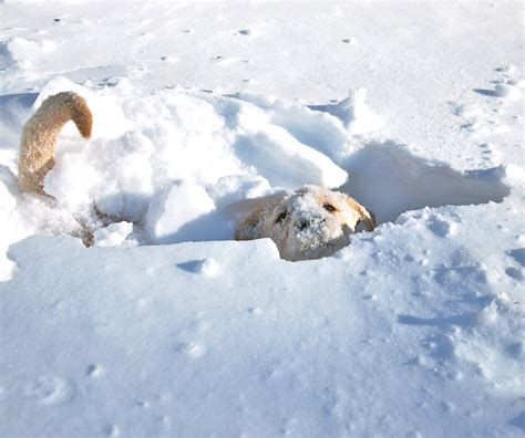 puppies in snow puppies in snow www imgkid the image kid has it