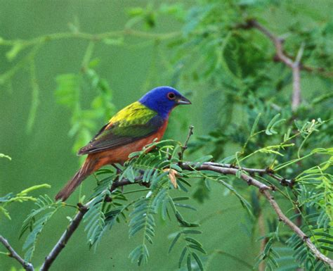 wild birds of the 21st century report
