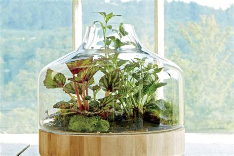 Indoor Container Gardening Ideas Plant A Glass House Indoor Container Garden Ideas Southern Living