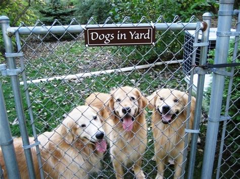 how to keep dog in yard how to prevent your dog from escaping your yard 3milliondogs
