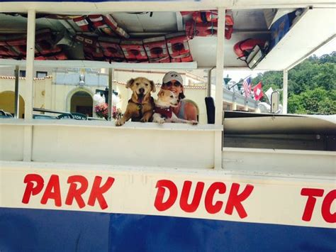 duck boat hot springs ar hot springs duck boat tour w our dogs picture of