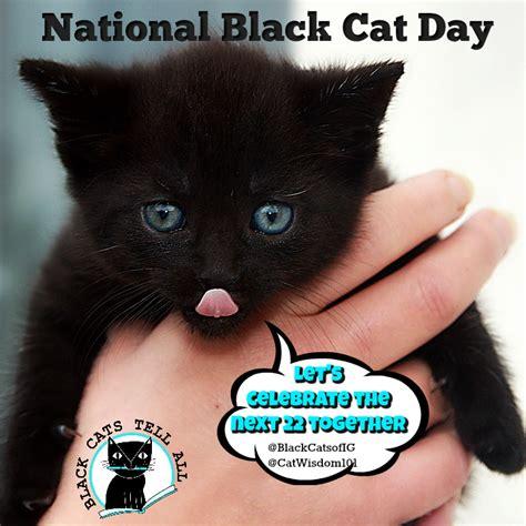 national black day 2017 tag palliative care cat wisdom 101