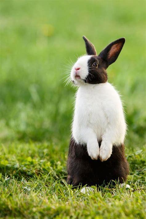 gambar foto metode awal memelihara kelinci lucu