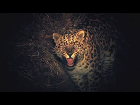 leopard s blood a leopard novel the keepers of leopard land e3 rangers collect blood