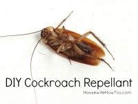 how to get rid of freeloaders in my house how do i keep roaches out of my house roaches house and need to