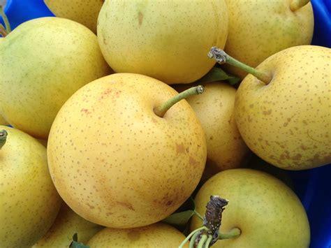 optimize daily time  harvest nashi asian pear